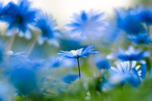 blue-flowers-nature-favim